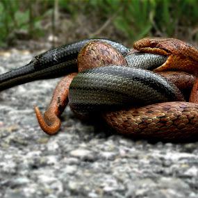 by Inger Wakolbinger - Animals Reptiles