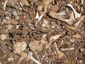 Photo: Ossi di gabbiani all'Isola delle Femmine