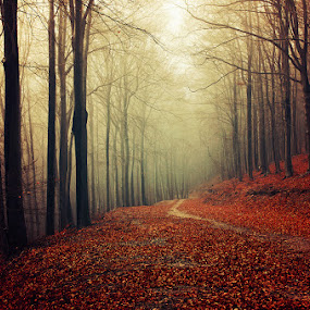 20151220-DSC_0955 by Zsolt Zsigmond - Landscapes Forests ( fog, autumn, fall, trees, forest, leaves, light, mist,  )