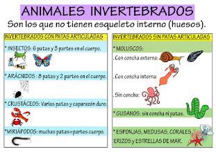 Photo: Invertebrados