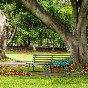 The bench by Pilar Gonzalez - City,  Street & Park  City Parks ( bench, autumn, trees, sunny afternoon, leaves,  )