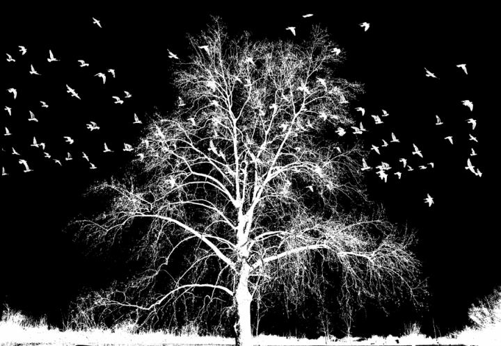L'albero...Jovanotti di AlfredoNegroni