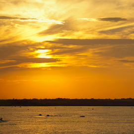 Branched Oak Lake Glider by Gayle Mittan - Landscapes Sunsets & Sunrises ( sky, clouds, water, summer, calm, warm, paraglider, sunset, weather, glide, boating, evening, lake,  )