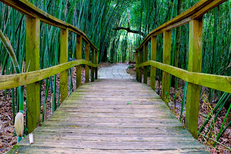 Photo: Bridge Through Bamboos