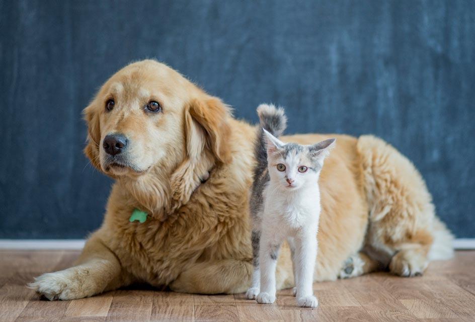E:\ảnh\cat dog 2.jpg