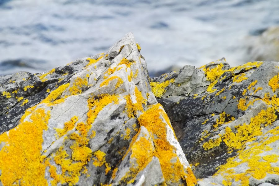 by Graham Potter - Nature Up Close Rock & Stone