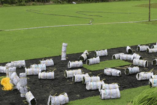 Các đơn vị dịch vụ tiến hành công việc trồng cỏ