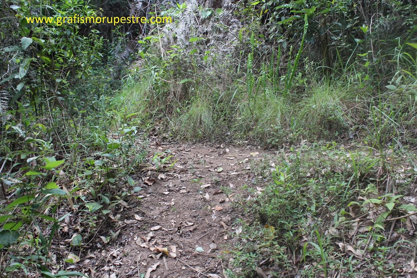 Ao chegar a este ponto de trilha perpendicular em T siga pela esquerda, se desejar visitar a Pedra do Sapo vá pela direita, uns 60m mas depois terá que voltar a este ponto.