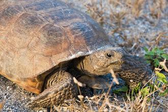 Photo: Tortoise