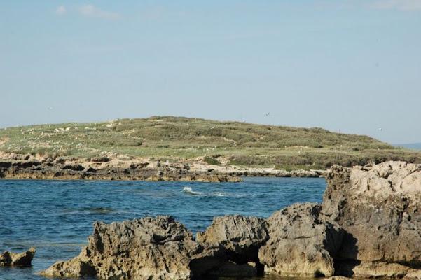 Isola dei gabbiani di patatata