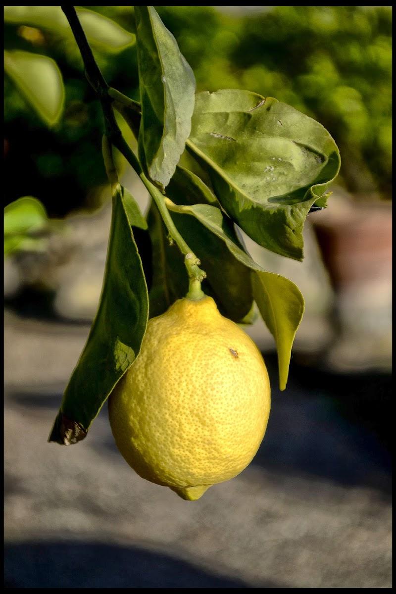 limone uguale vitamina C di vivancove84