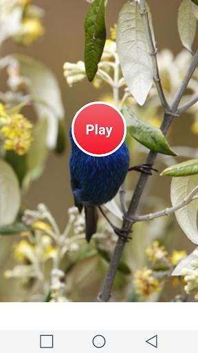 子供のための鳥