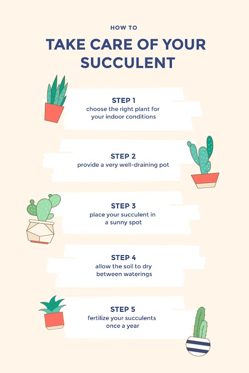 Care of Your Succulent - Pinterest Pin Template