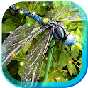 Dragonfly Best icon