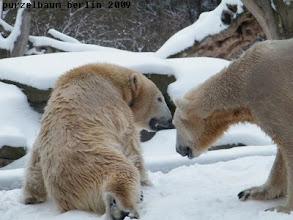 Photo: Knut geht mal nach ihr schauen ;-)