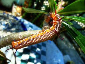 Photo: Caterpillar #MacroMonday  Photography by Justin Hill ©