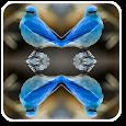 MirrorPhotoCollageEditor icon