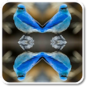 MirrorPhotoCollageEditor
