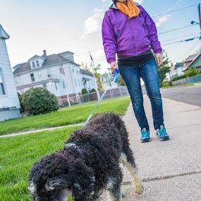 by Ben Porway - Animals - Dogs Portraits ( walking, poodle, wideangle, jackson, dog, poodle min, emma )