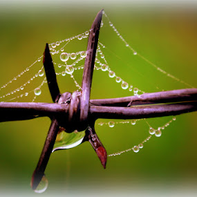 by Crystal  Wilson - Nature Up Close Natural Waterdrops (  )