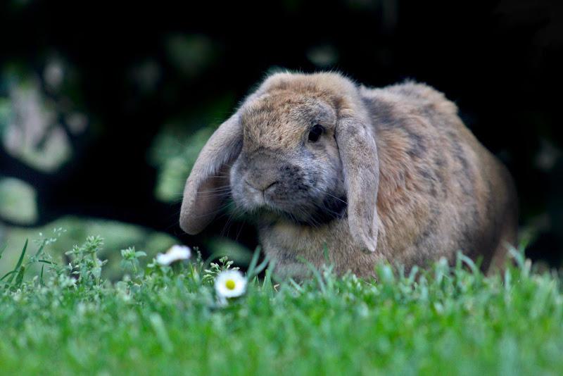 Easter Bunny di lukich