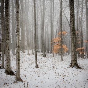Foggy Morning by Maggie B - Landscapes Forests