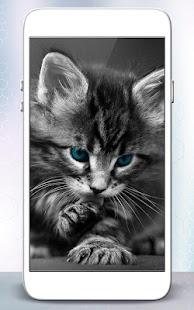 Koťátko Kočka Živé Tapety - náhled