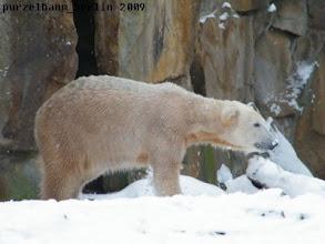 Photo: Knut mit Schneenase :-)