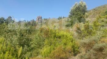 terrain à Morosaglia (2B)