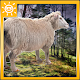 Sheep Farming Simulation (game)