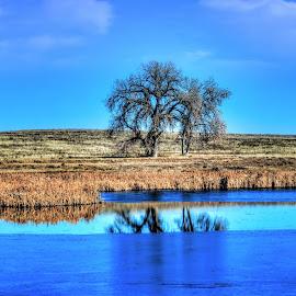 Blue prairie Morning by Bruce Newman - Landscapes Prairies, Meadows & Fields ( morning light, vivid colors, waterscape, nature, landscape, prairie,  )