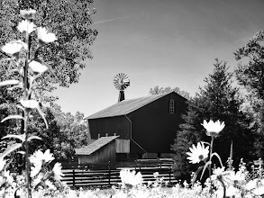 Photo: Black and white photo of a barn behind pale flowers at Carriage Hill Metopark in Dayton, Ohio.