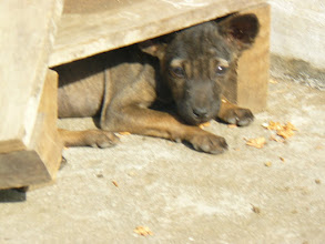 Photo: shy puppy
