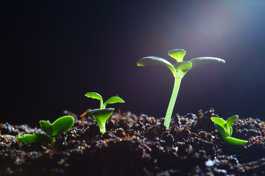 Plant competition by Tan  Kian Yong - Nature Up Close Other plants ( plant, seedling, light, growth, competition )