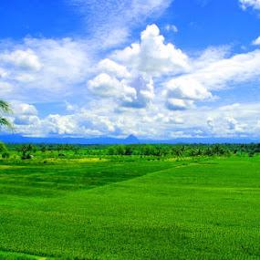 Rice Farms by Enggus Fatriyadi - City,  Street & Park  Vistas