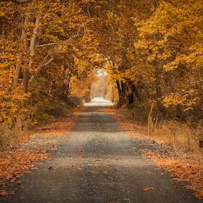 Autumn Colours by Baggelis Karaliolios Zerofive - Landscapes Forests