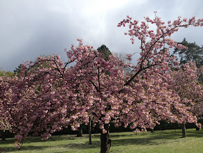 Photo: Spring blossoms in Paris
