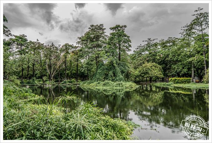 大東溼地公園水森林