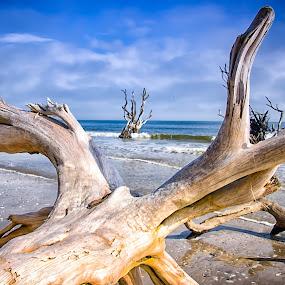 Dead Trees Botany Bay Beach by Carol Ward - Landscapes Beaches ( botany bay beach, protected beach, beautiful south carolina beach, dead trees, sand and dead trees,  )