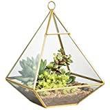 plante-grasse-plantes-domicile-interieur-maison-astuces-décoration-déco-cactus-aloe-vera-idees-vert