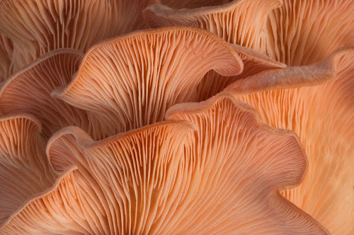 Mushroom by VAM Photography - Nature Up Close Mushrooms & Fungi ( abstract, mushroom, up close, nature, places, travel )