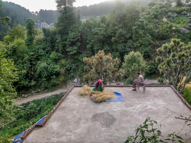 women+cleaning+barley+in+bhagsu+nag+village+himachal+pradesh