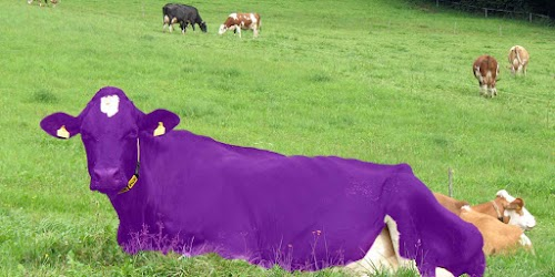 Bring out the Purple Cow