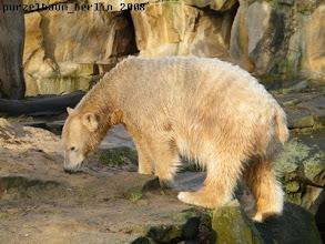Photo: Knut begutachtet seinen Sandhaufen ;-)