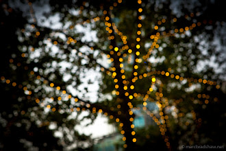 Photo: Tree lights