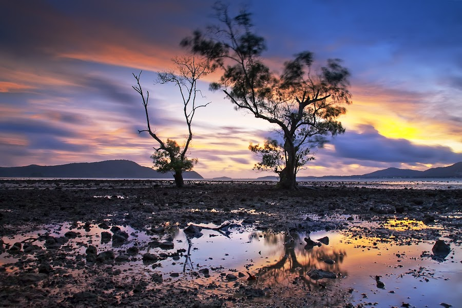 Two Tree by Arthit Somsakul - Nature Up Close Trees & Bushes ( two, tree, sunset, stone, beach, sunrise, reflex )