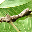 Ant nest on tree