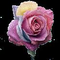 Roses d'arc-en-ciel