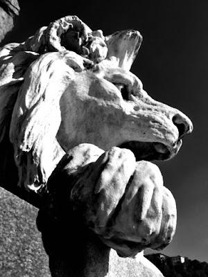 Il leone in città.TORINO di adele