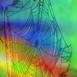 Web Abstract 3 by Reuss Griffiths - Nature Up Close Webs ( spider web, red, diffraction grating, green, blue, yellow )